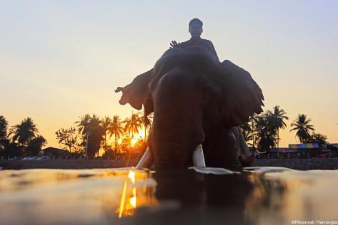 Pong_photoessay_elephant 5